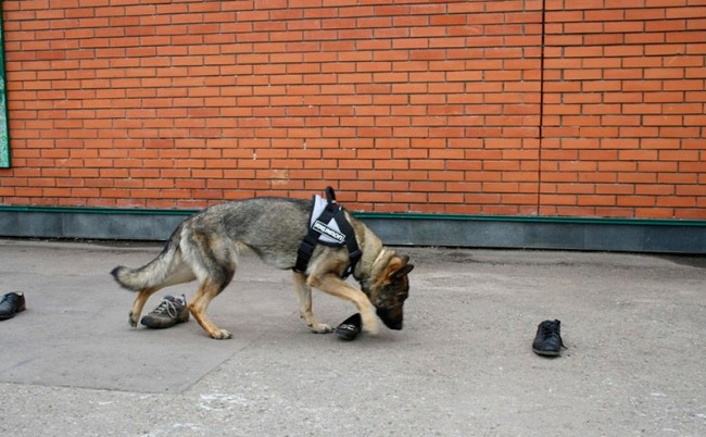 Как научить собаку команде ищи
