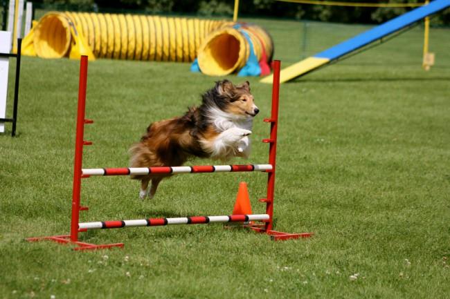 Как научить собаку команде барьер