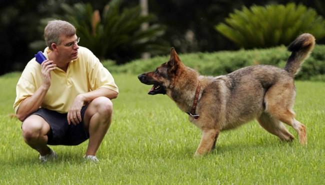 Зачем собакам знать команды