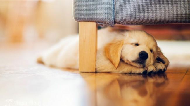хватит ли места щенку в доме