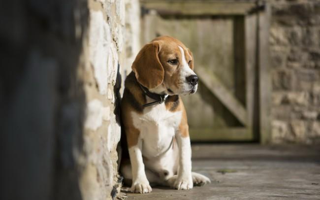 плюсы и минусы взрослой собаки