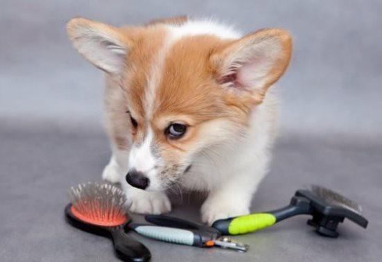 уход за глазами собаки