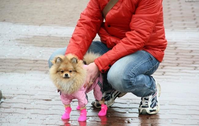 уход за лапами собаки