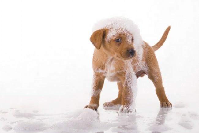 как мыть щенка