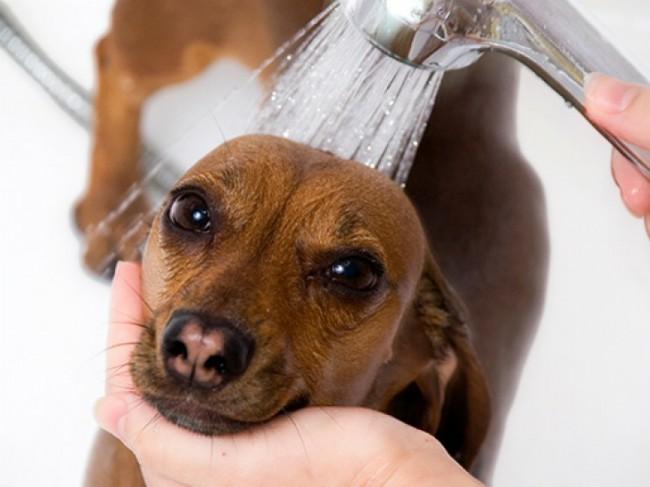 как правильно мыть собаку