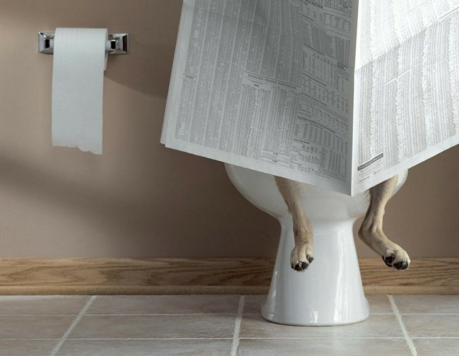 как приучить собаку ходить в туалет