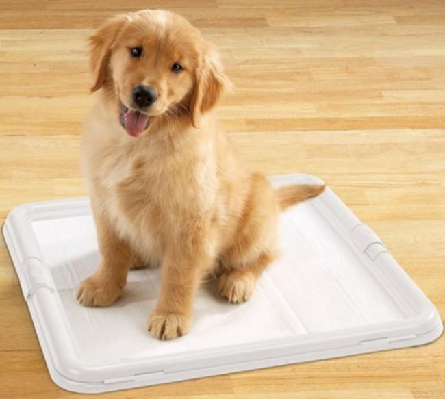 как приучить собаку к туалету на пеленку