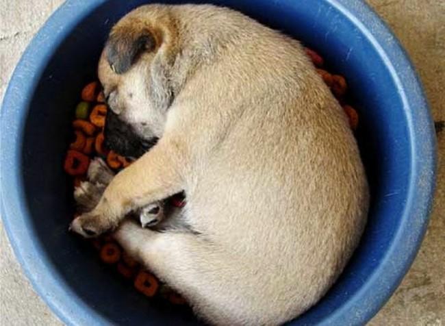 можно ли кормить щенка сухим кормом