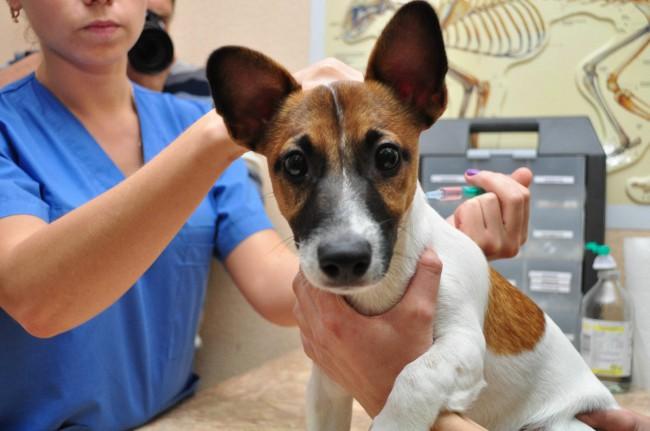 вакцина от лишая для собак