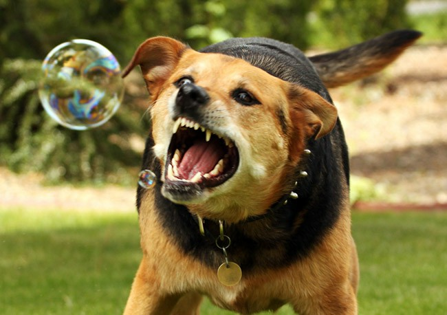 как проявляется бешенство у собак