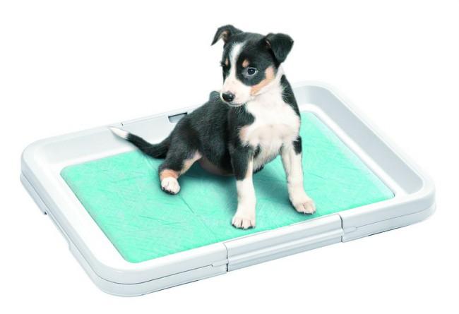 как приучить щенка к туалету в лоток