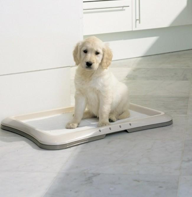 как приучить щенка лабрадора к туалету дома