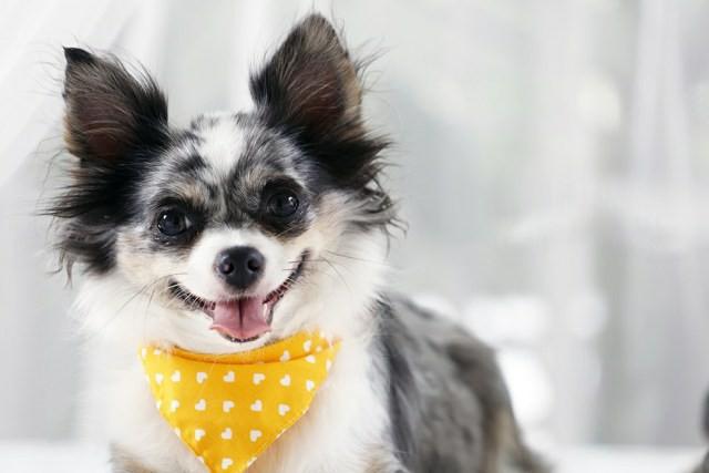 Красивые клички для собак новые фото