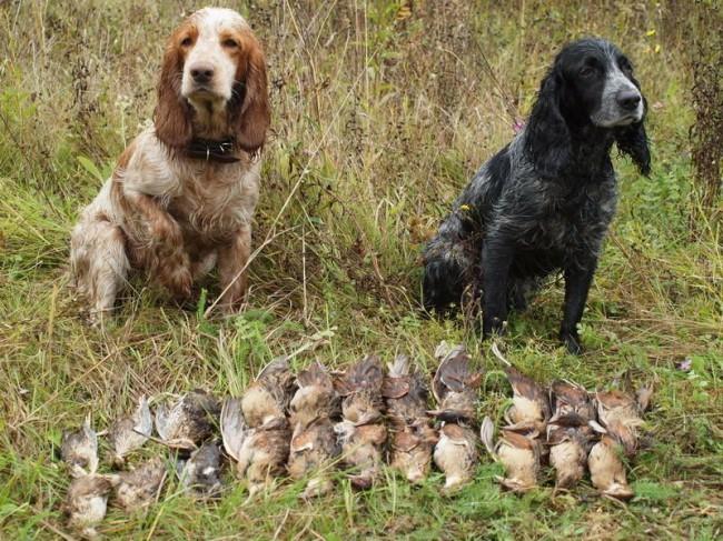 охотничьи породы собак фото