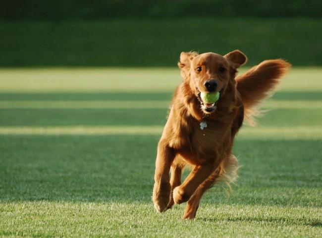 Как научить собаку команде апорт с нуля